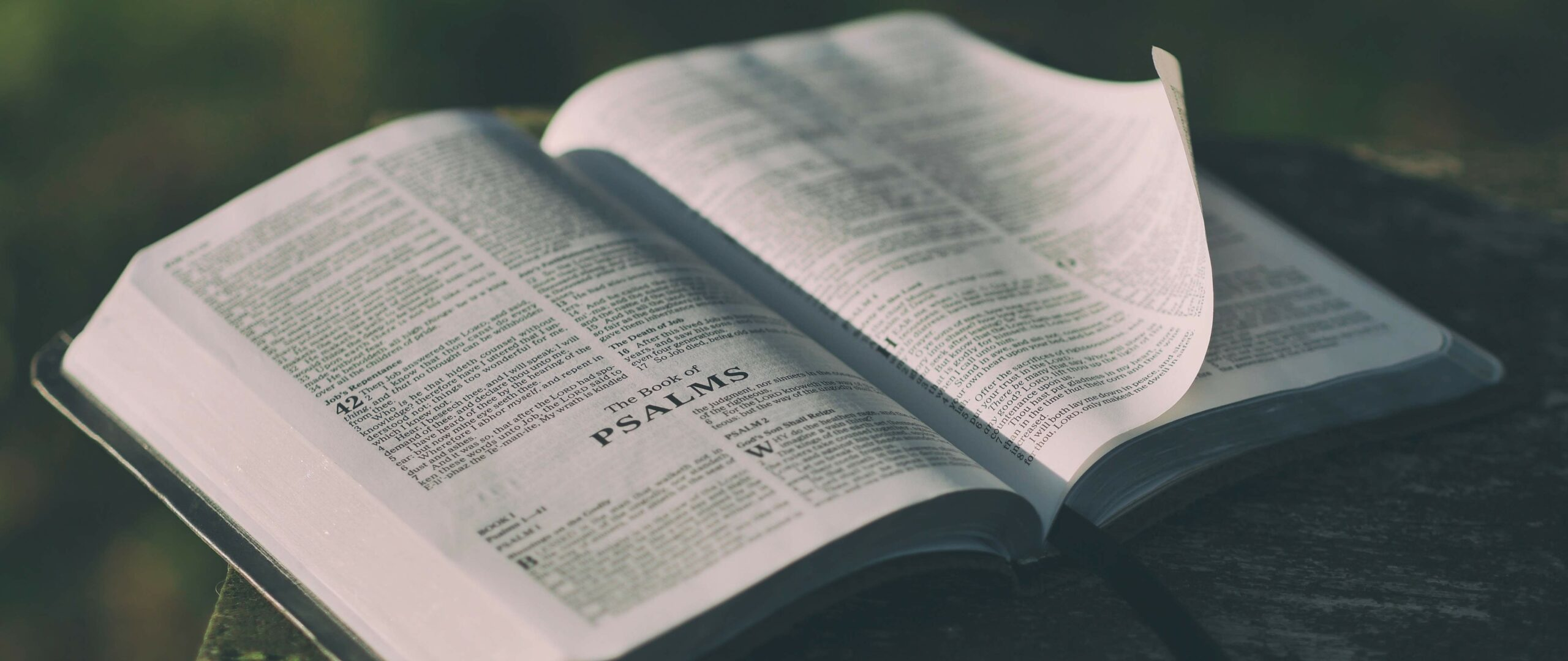 Main image for Resolve to Study the Bible