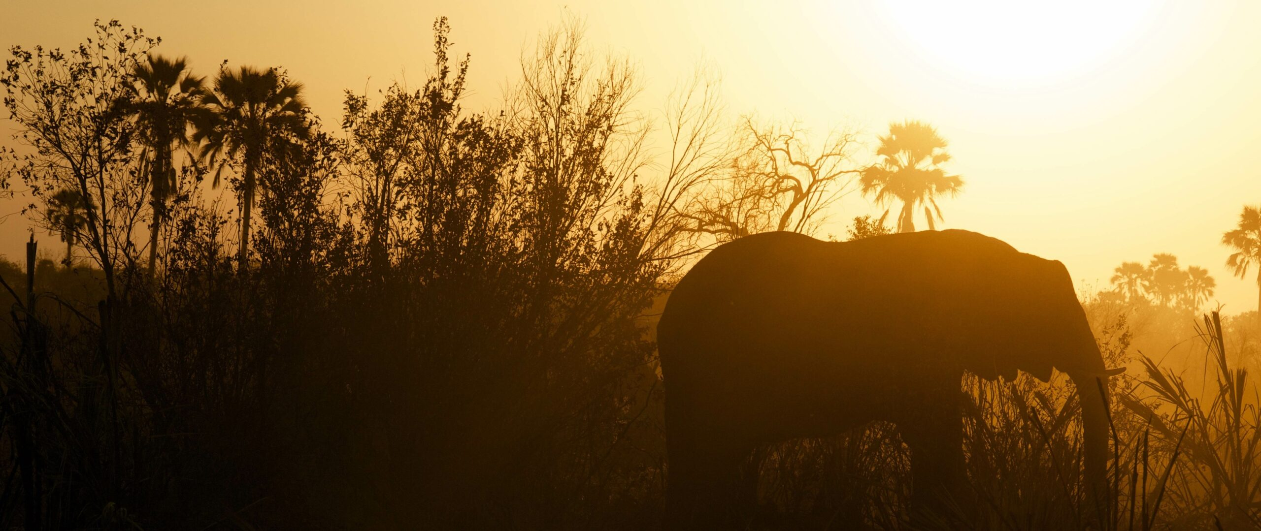 Featured Image for The Inedible Elephant of Personal Bible Study