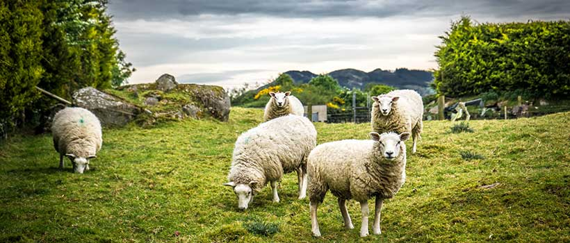 Featured Image for Book Review: A Shepherd Looks at Psalm 23