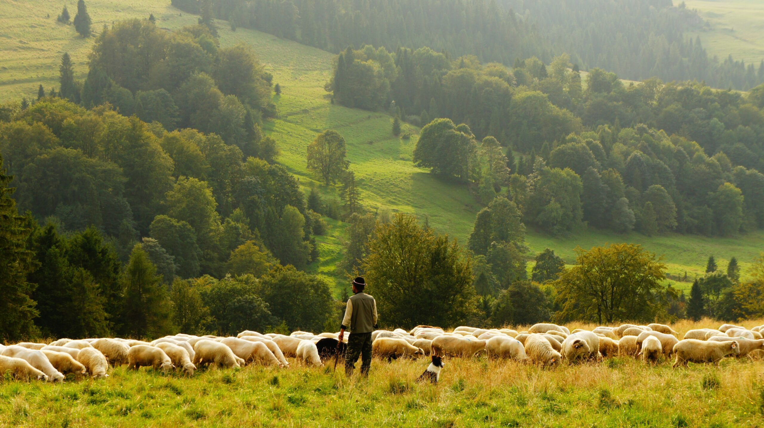 Featured Image for Shepherding The Flock